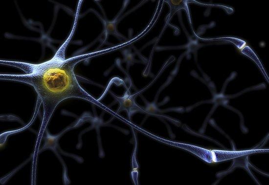 科学家称:大脑绘图计划地位堪比阿波罗登月