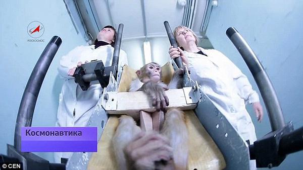 俄罗斯计划送猴子前往火星 为人类宇航员探路