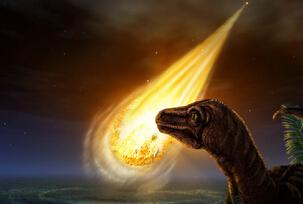物种大灭绝可促进生物飞跃进化