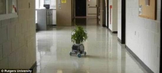 """世界首款""""盆景机器人""""可沿着阳光室内移动"""