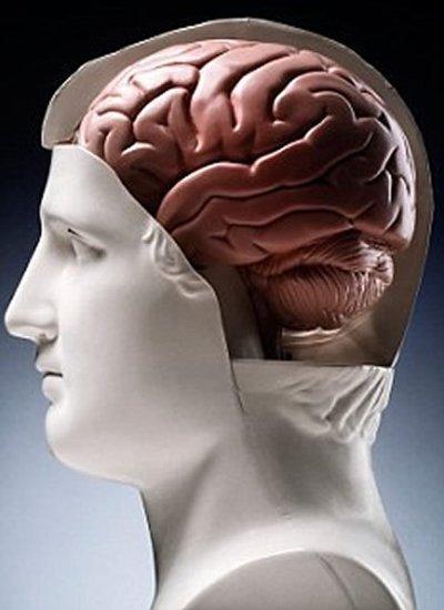 人类的记忆力、智商和注意力的进化也采取中庸之道,继续提高可能是一种危险做法。