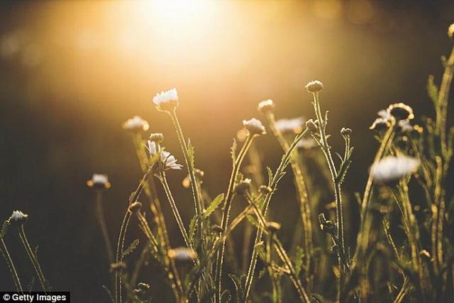 最新研究显示植物像人类一样具有学习能力