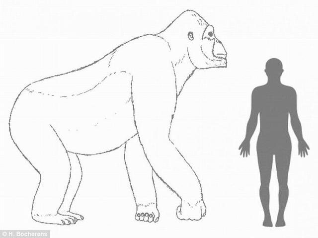 十万年前神秘远古巨猿由于气候变迁导致灭绝