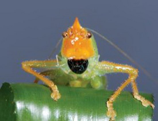 """奇特昆虫腿部长有类似哺乳动物""""耳朵""""结构"""