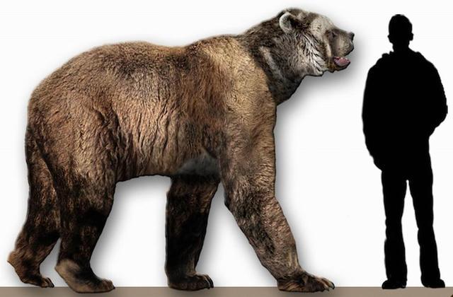 研究表明过去五百年人类活动致322种动物灭绝