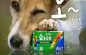 狗狗主演柯达搞笑广告