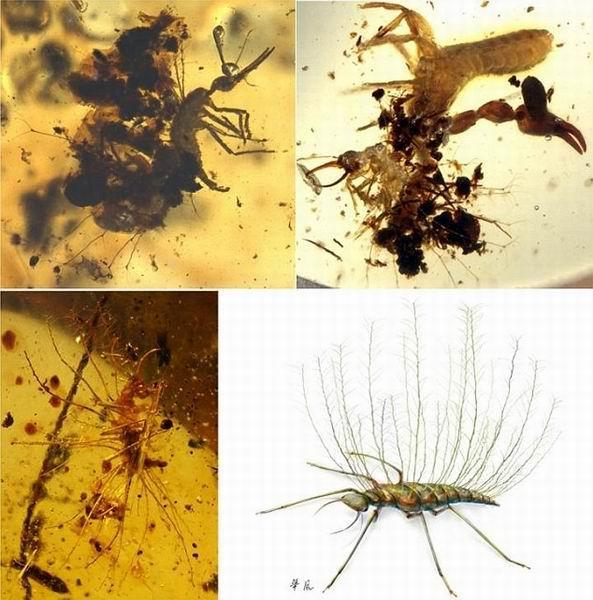 科学家称一亿年前远古昆虫就拥有了拟态能力