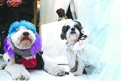 美国小狗25万美元办婚礼 破吉尼斯世界纪录