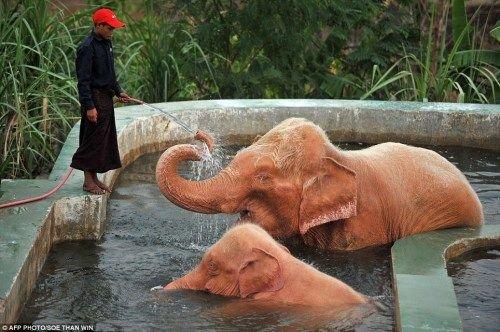 """母象与小象在""""冲澡"""""""