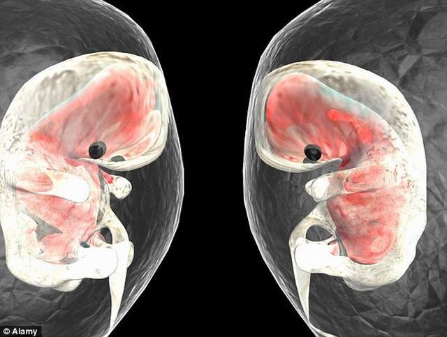 研究显示胎儿首次心跳出现在受孕第16天