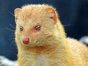 组图:盘点自然界带有迷人色彩的动物