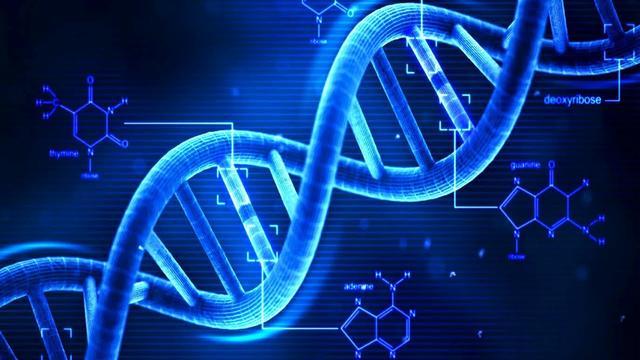 DNA四螺旋结构富集在基因开关区确认 或能研发新疗法