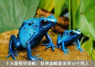 妖艳毒蛙能够杀死10个男人