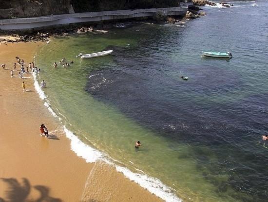 墨西哥出现巨型鱼群 疑与日本地震有关联(图)