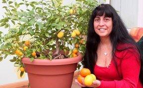 英橘树意外结出4枚柠檬