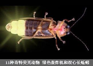 11种奇特荧光动物