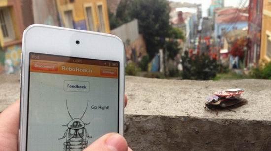 科学家打造活体机械蟑螂 用手机控制其移动