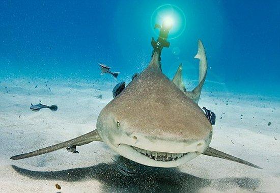 """高科技食肉动物:邪恶博士打造""""激光鲨鱼"""""""