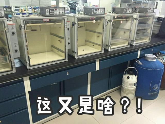 如何看待玻璃杯中孵小鸡?一个日本综艺引发的21天实验直播