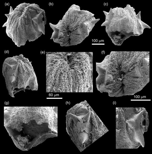 南京古生物所等发现已知最古老的幼虫