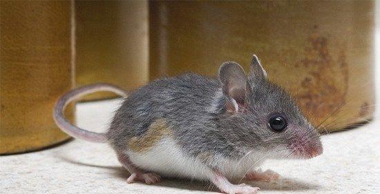人类活动或导致城市动物进化中大脑体量变大