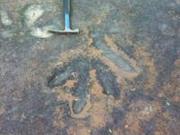 四川发现2.1亿年前怪兽足迹 曾是恐龙天敌