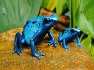 全球最美丽的青蛙