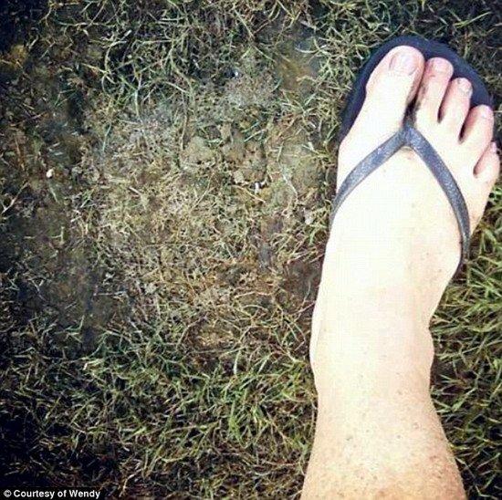 美國居民後院發現神秘腳印被猜大腳野人出沒