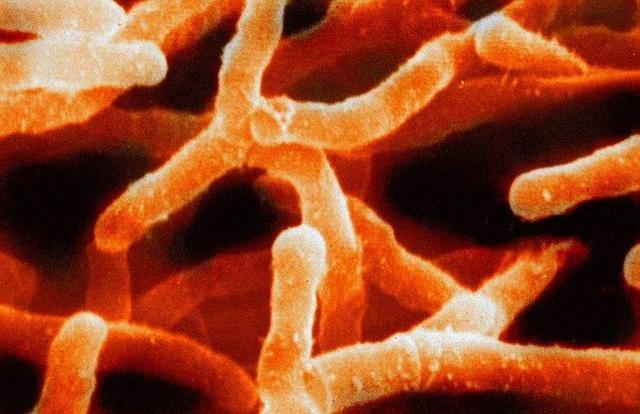 科学家称地球物种数量可达到10000亿种 99%未知