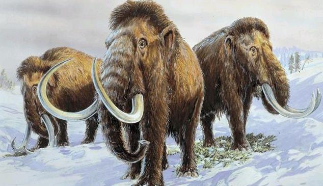 研究表明:最后的猛犸象群遭遇了基因灾难