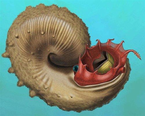 """新研究显示古菊石类生物并非皆""""游牧"""""""