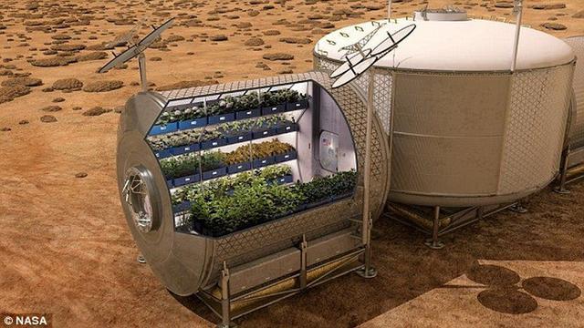 美国最新水栽法可在火星表面种植水果和蔬菜