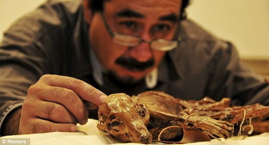 墨西哥首个木乃伊宠物狗 可洞悉古代部族习俗