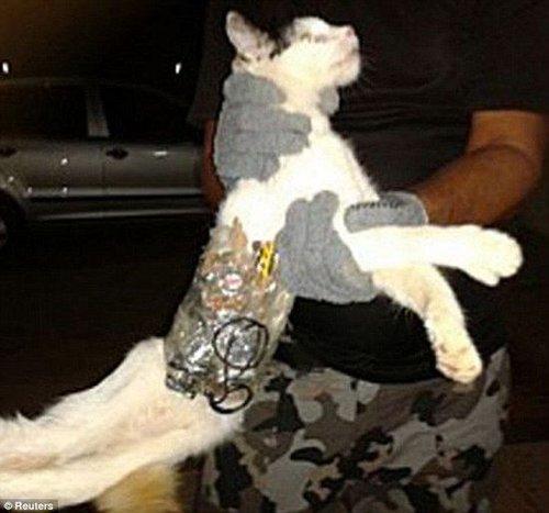 """俄罗斯一只猫咪往监狱""""走私""""手机遭逮捕"""