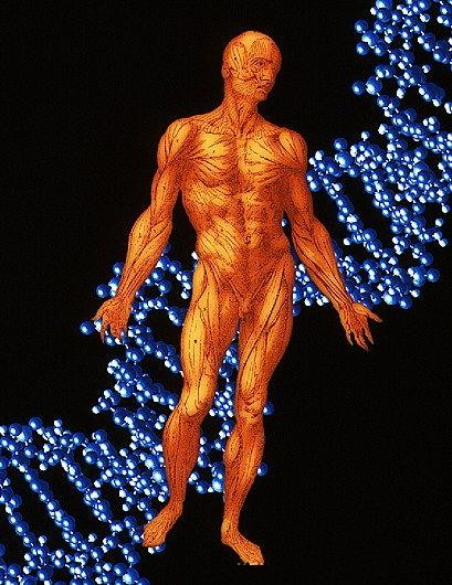 """5亿年前生物""""错误DNA倍增""""促成了人类形成"""