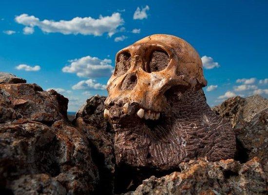 """如何将自己""""变身""""成为化石?"""
