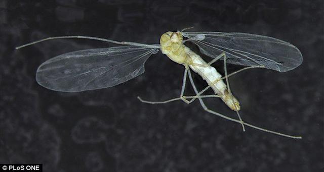 克罗地亚洞穴发现奇怪昆虫颠覆人们认识