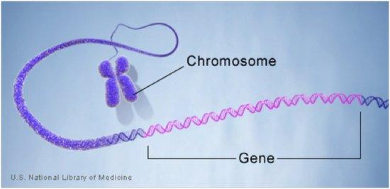 什么是基因?什么是转基因技术?