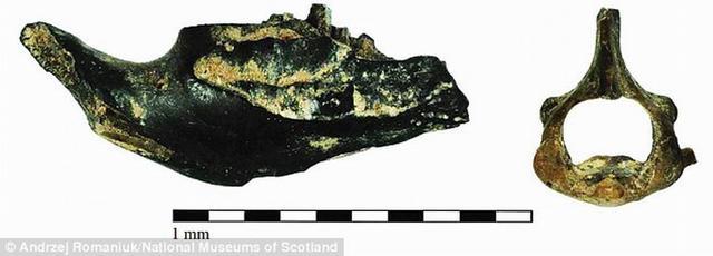 研究称欧洲人吃老鼠的历史可追溯至五千年前