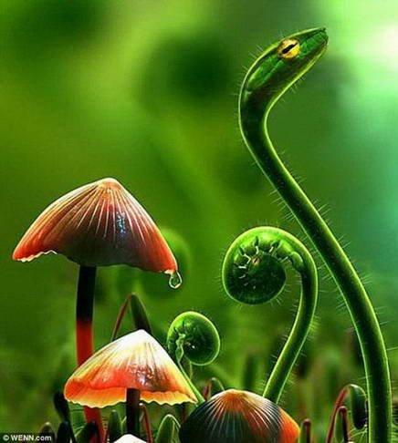 臭氧层空洞致使植物变异