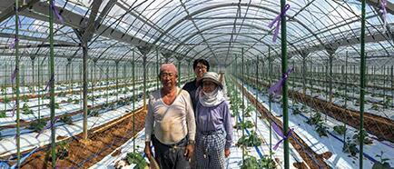 都说谷歌的人工智能高大上 那就先说说如何帮农民分拣黄瓜