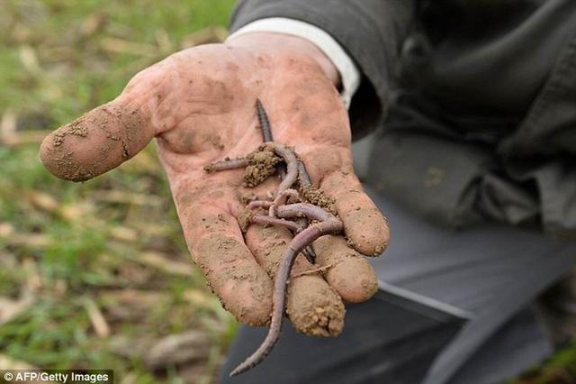 人类家居昆虫通常携带1500多种病毒