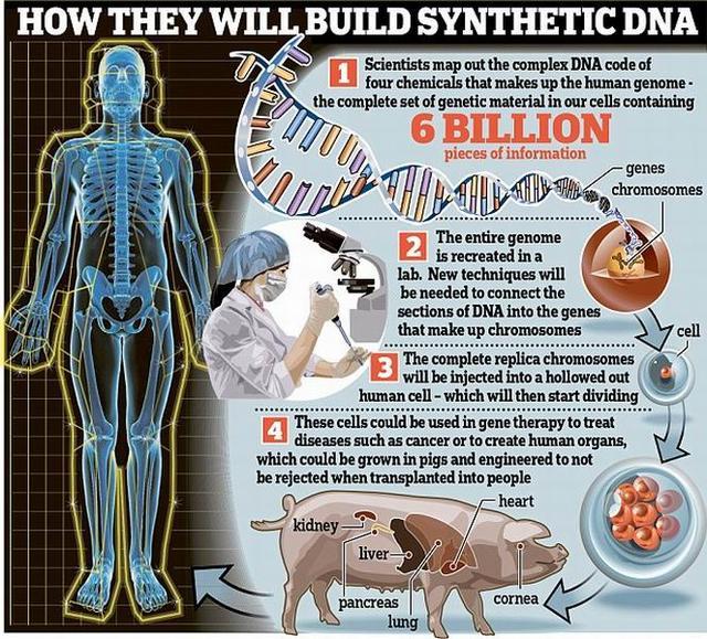 科学家计划十年之内合成人类完整细胞