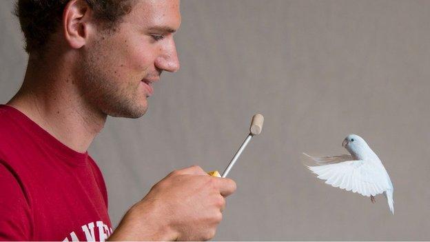 科学家研发超灵敏设备 可测量飞行中鸟类体重