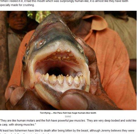 英国男子捕获大型食人鱼 曾咬死多名渔民