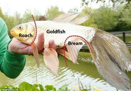 """渔夫发现""""混血怪鱼"""" 长相奇特疑杂交后代"""