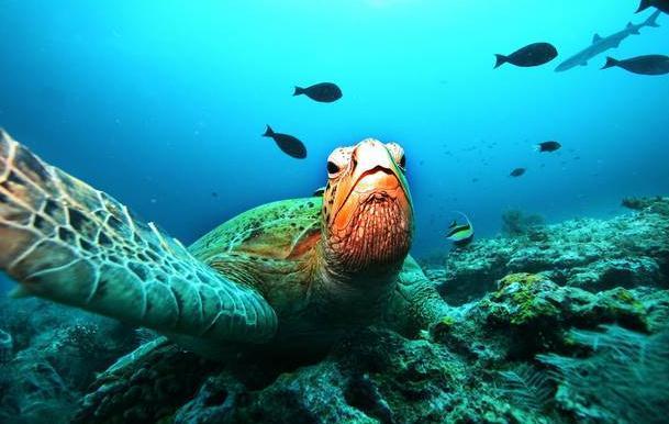悲哀!气候变暖可导致海龟种群失去雄性