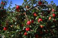 乔布斯鲜为人知的13个秘密:首份工作在苹果园