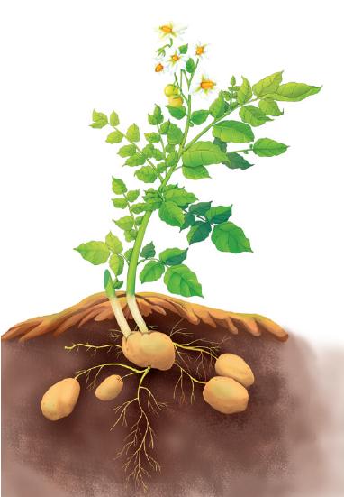 手绘植物成长过程