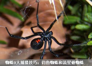 细看蜘蛛9大捕猎技巧